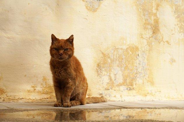 Mdina straat kat.JPG